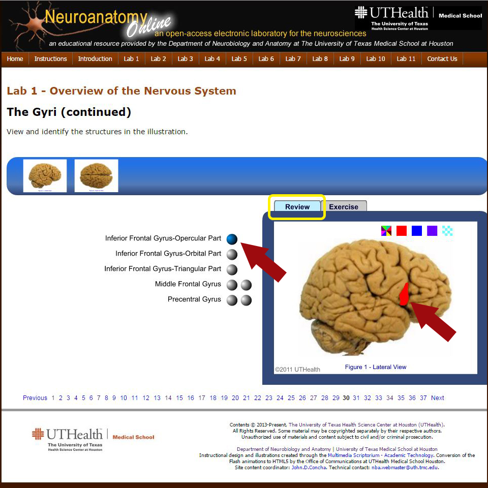 Neuroanatomy Online An Open Access Electronic Laboratory For The