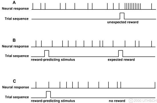 Basal Ganglia (Section 3, Chapter 4) Neuroscience Online: An