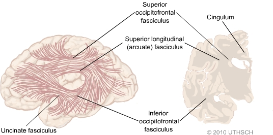 Higher Cortical Functions Association and Executive