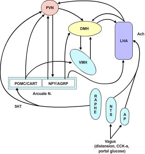 orexigenic and anabolic agents